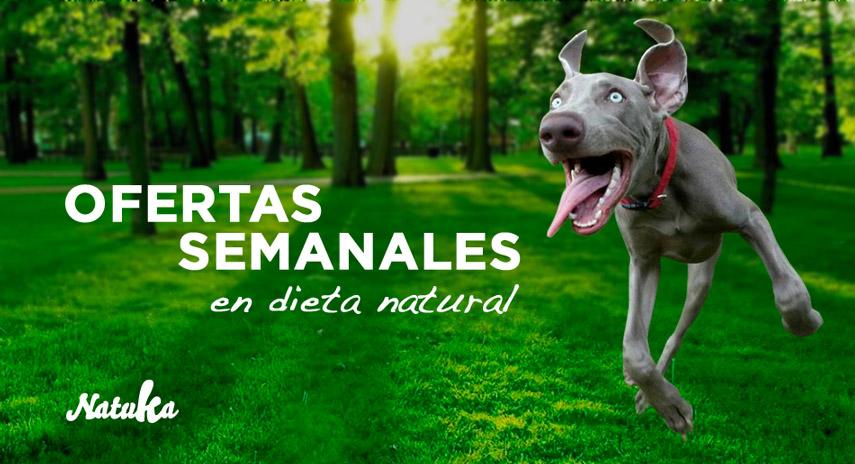 oferta_dieta_natural_para_perros