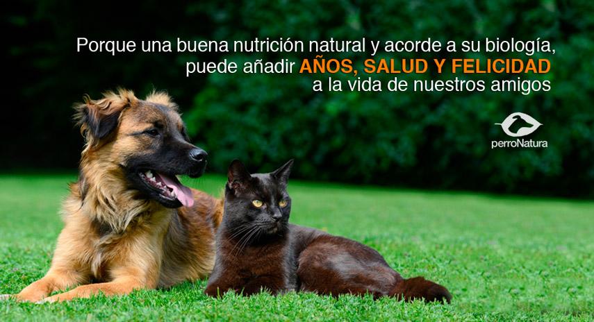 nutricion_natural_perros
